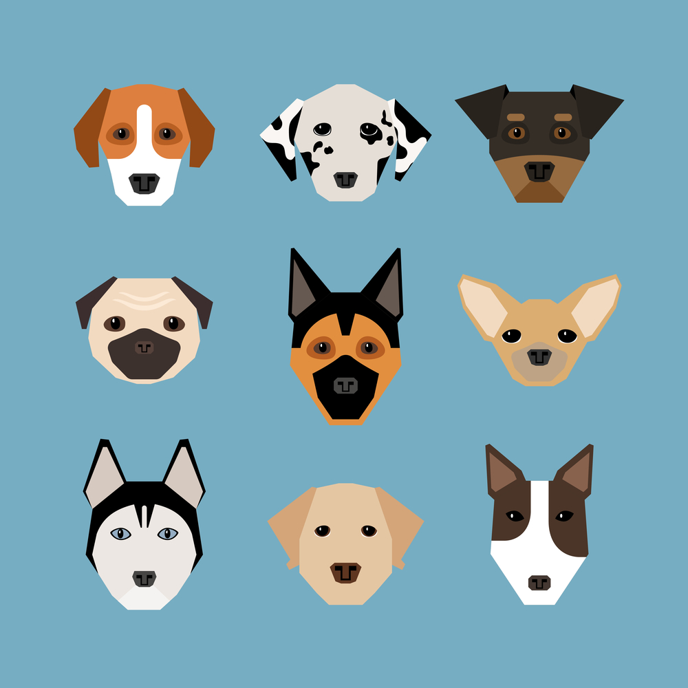 ¡Gracias, Internet! Las mejores fotos de perros para celebrar el Día del Perro