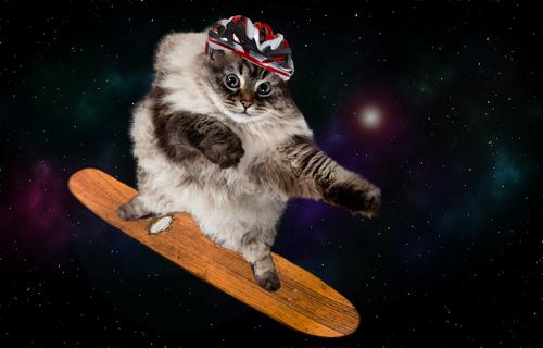 gatos para partirte de risa: gato psicodélico