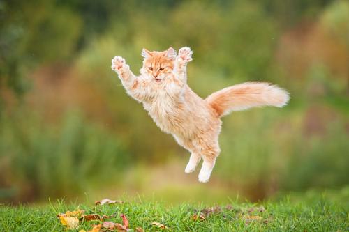 gatos graciosos dia del gato