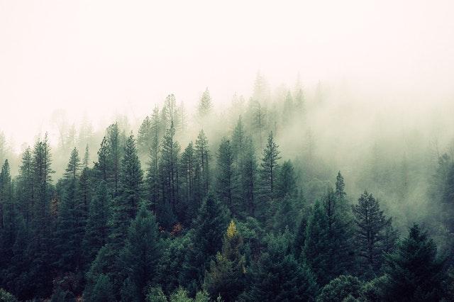 Parques naturales de España: Mejores reservas naturales para vivir en plena naturaleza