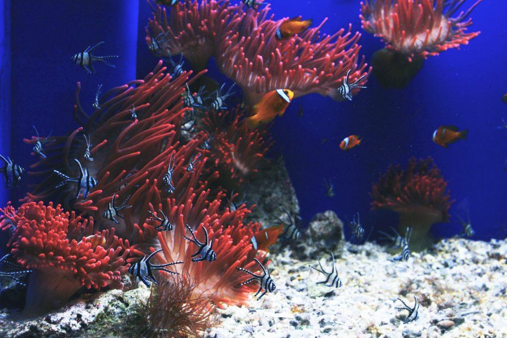 Gran Barrera de Coral, foto de un paisaje natural bonito.