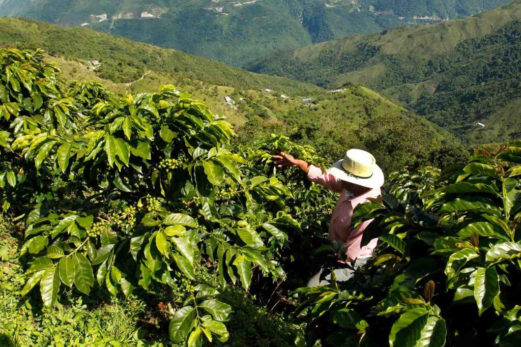 paises productores de café
